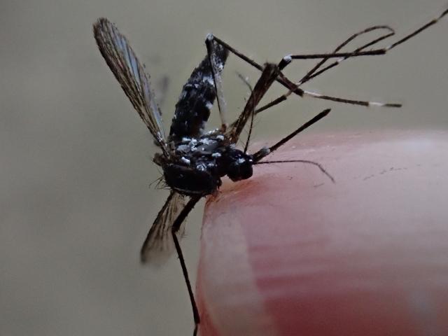 蚊は4階以上には飛ばないって本当なの?実際に住んでいる経験!